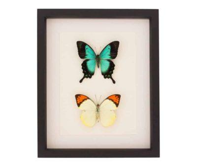 framed butterfly set