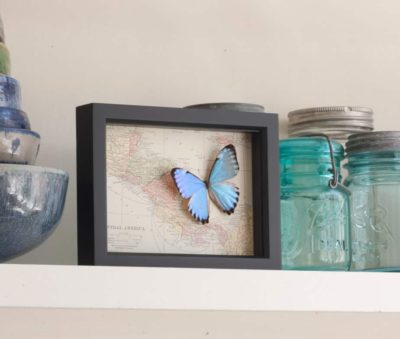 framed map of central america and costa rica with butterfly