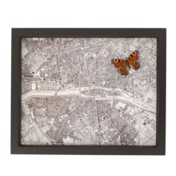 framed map of paris with butterfly