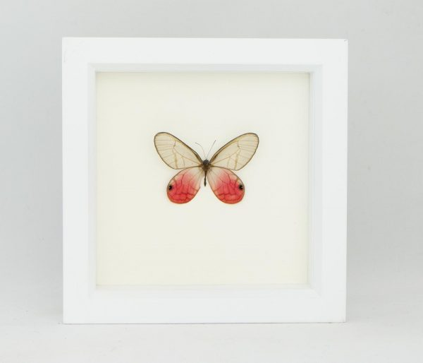 framed pink butterfly