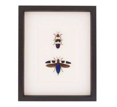 Framed Red Speckled Jewel Beetle Set
