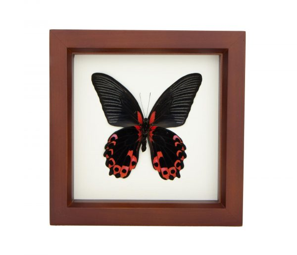 framed-red-butterfly-decor