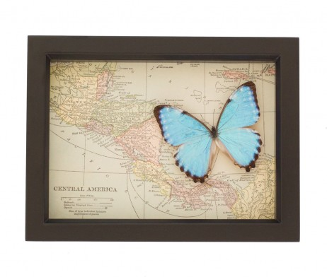 vintage central america map with butterfly