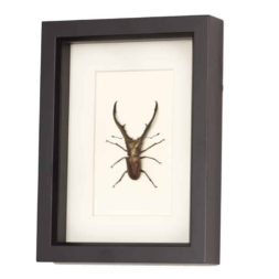 beetle shadowbox art