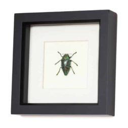 beetle shadowbox
