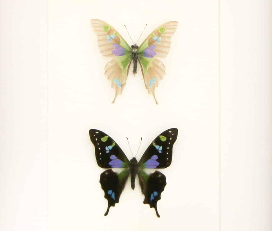butterfly set