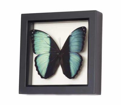 butterfly shadowbox art