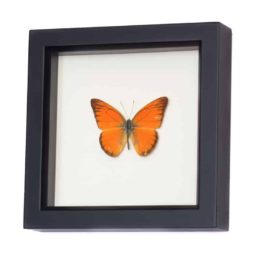 framed butterflys