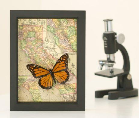 framed California map