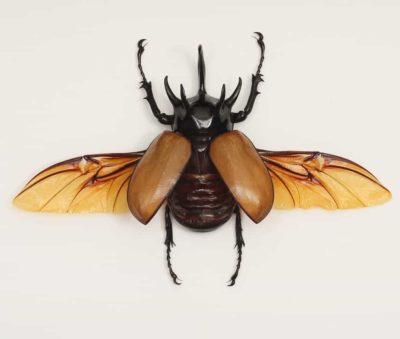 framed rhino beetle