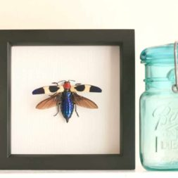 insect home decor