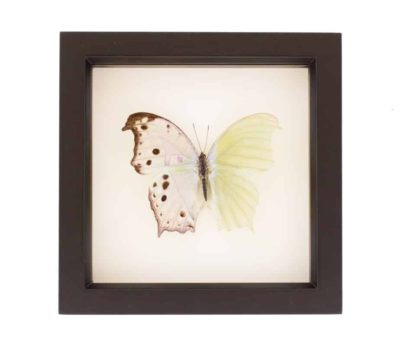 insect shadowbox art