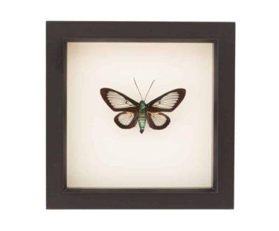 moth taxidermy art