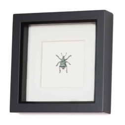 real weevil art