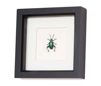 mounted insect