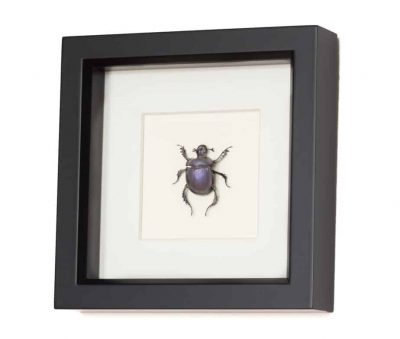 scarab beetle for sale