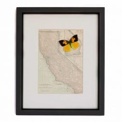 vintage framed california map