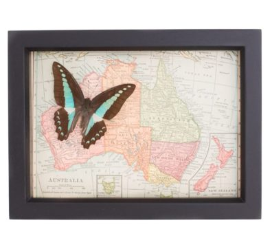Vintage Map of Australia with Butterfly