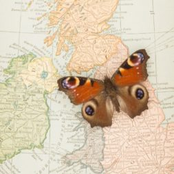 old map of england with butterfly