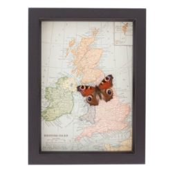 Vintage map of great Britain with butterfly
