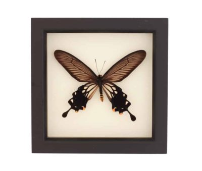 framed windmill butterfly