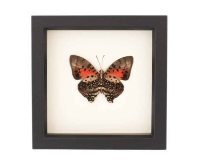 framed insects for sale