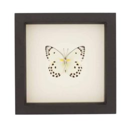 framed polka dot butterfly