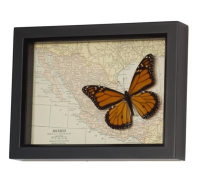 Vintage Map of Mexico with Butterfly