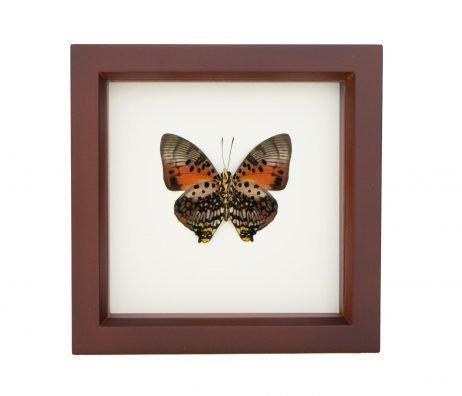 framed shining red zingha