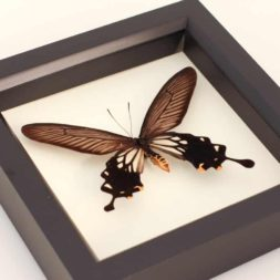 windmill butterfly framed