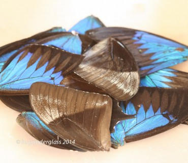 real butterfly wing pieces