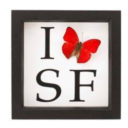 i love san francisco butterfly