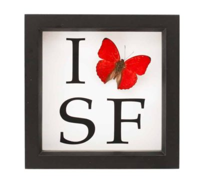 I love SF butterfly
