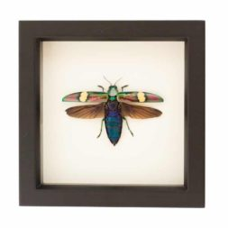 framed beetle art