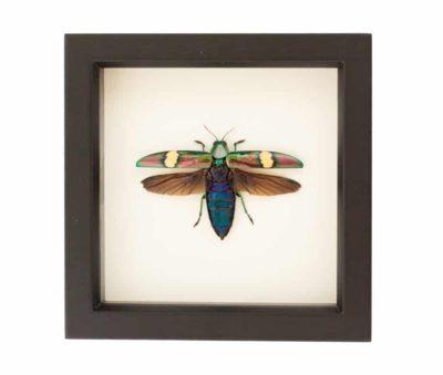 framed beetle art