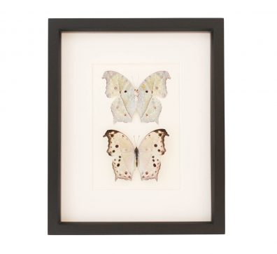 Mother of Pearl Butterfly Collection