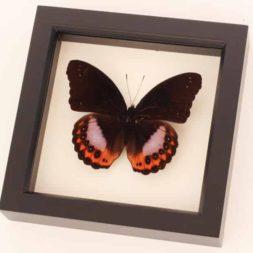 framed butterfly home decor