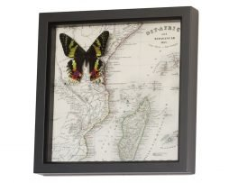 framed map of Madagascar with butterfly