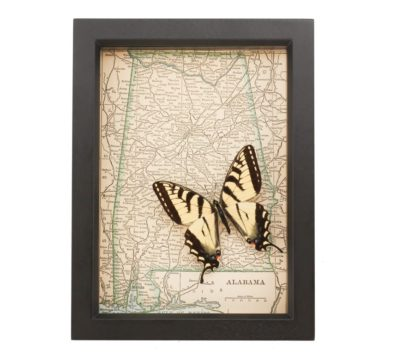 Framed Map Alabama Native Butterfly