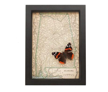 framed map alabama red admiral