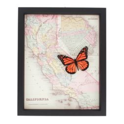 framed map of California with Monarch butterfly