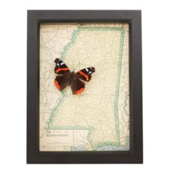 framed map of mississippi with red admiral butterfly