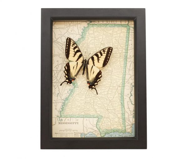 framed map of mississippi with tiger swallowtail