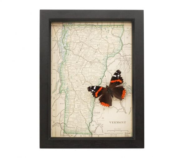 framed map of vermont admiral butterfly