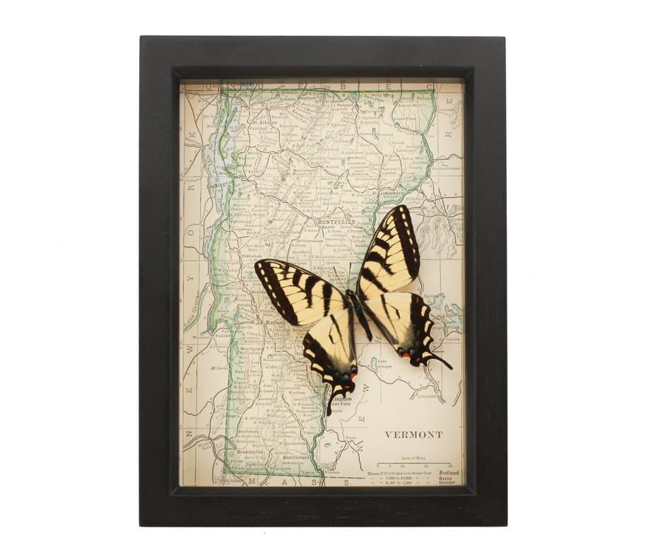framed map of vermont | real butterflies