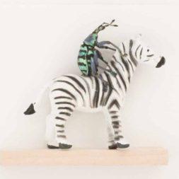 beetle riding a zebra