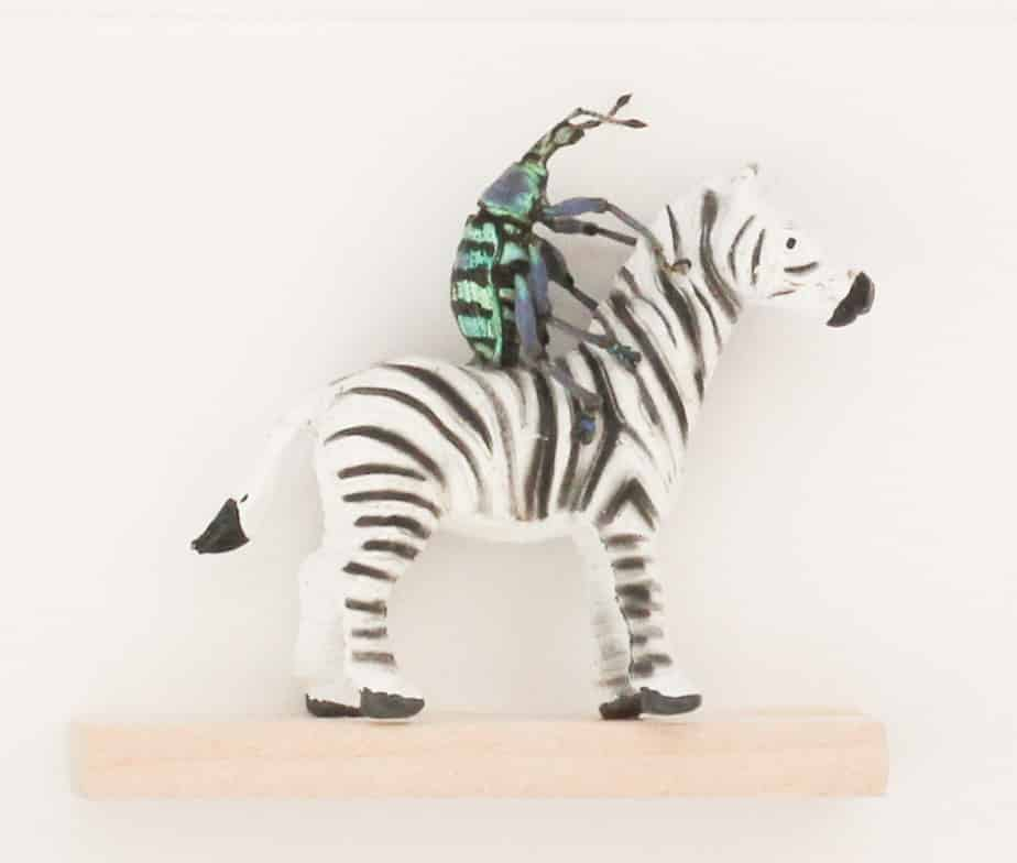 beetle riding a zebra