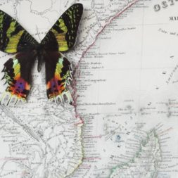 map of madagascar with moth