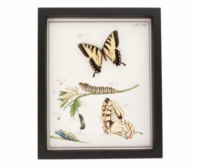 old insect print tiger swallowtail