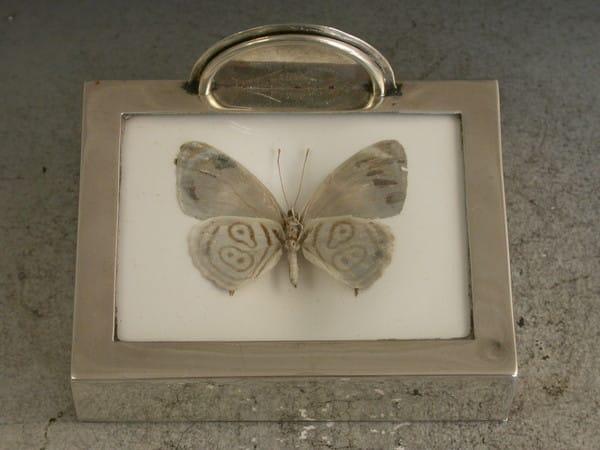 denton framed butterfly